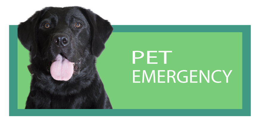 Veterinary Care in Kennesaw, Acworth, Oak Grove, Marietta and surrounding towns