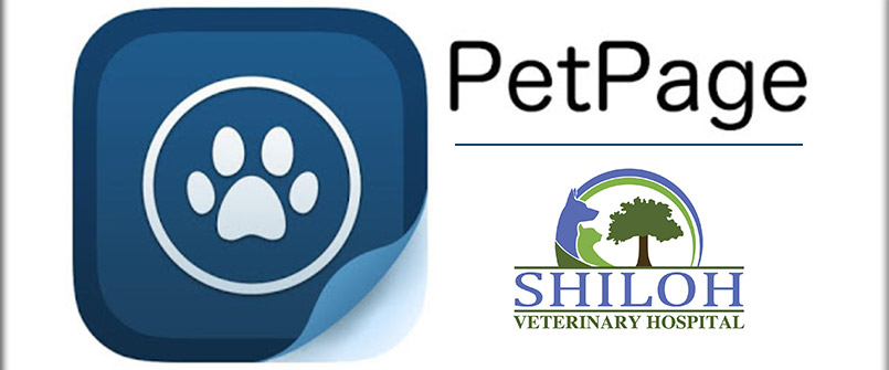 Shiloh Veterinary Hospital, Kennesaw, GA