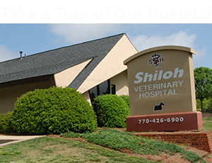 Shiloh Veterinary Hospital Video Tour